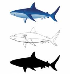 sharks vector image