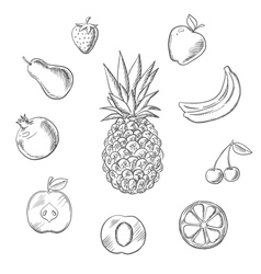 Fruits an berries sketches set vector image vector image