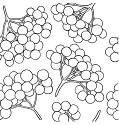 Guelder rose pattern on white background vector