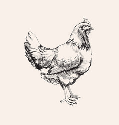 Hand drawn sketch chicken hen vector