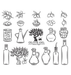 Olive oil set vector
