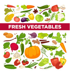 fresh vegetables advertisement with organic vector image vector image