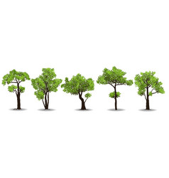 collection of tree vector image