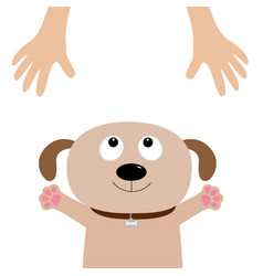 Dog face pet adoption puppy pooch looking up vector