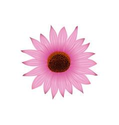 Echinacea flower head and petals hedgehog vector