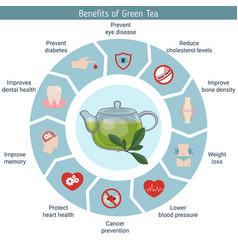 Foods infographics green tea foods infographics vector
