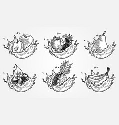 fruits splash set vector image
