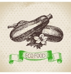 Hand drawn sketch zucchini vegetable Eco food vector