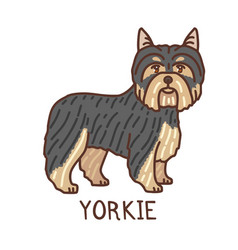 Isolated yorkshire terrier in hand drawn doodle vector