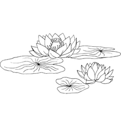 lotus water lily vector image