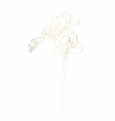 freesia floral botanical golden line flower vector image