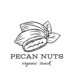 Hand drawn pecan nuts vector