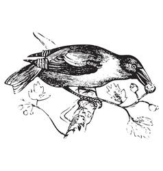 Hawfinch vintage engraving vector