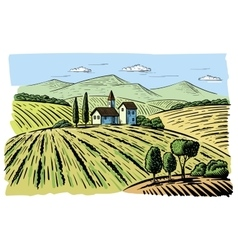 landscape with agrarian fields vector image