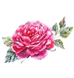 Watercolor hand drawn rose vector