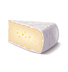 Brie cheese isolated on white vector image vector image