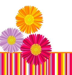 Daisy flowers greeting card vector image