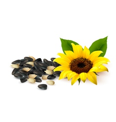 Background with yellow sunflowers and sunflower vector image