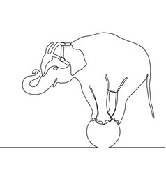 elephant standing on a ball continuous one line vector image