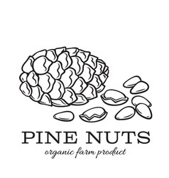Hand drawn pine nuts vector