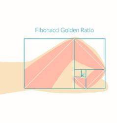 Human hand fibonacci ratio vector