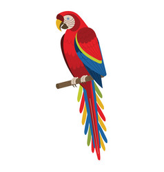scarlet macaw red exotic parrot in flat vector image