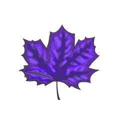 hand drawn maple leaf vintage engrave sketch vector image vector image