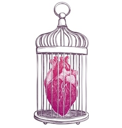 Birdcage with anatomical heart vector