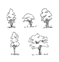 Set of hand drawn architect trees vector