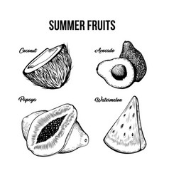 summer fruits hand drawn set vector image