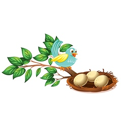 A blue bird watching the eggs in the nest vector