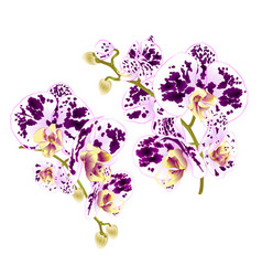 branches orchids spotted flowers tropical plant vector image