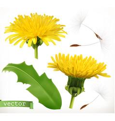 Dandelion 3d icon set vector
