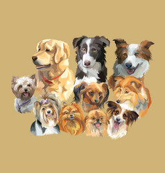 fluffy dog breeds vector image