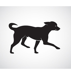 image an dog chihuahua puppies vector image