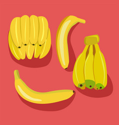 bananas pack bunches of fresh banana fruits vector image vector image