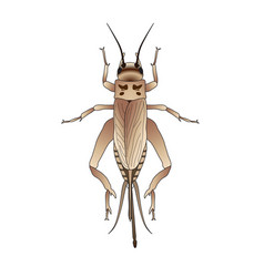 cricket grig gryllus campestris sketch of vector image