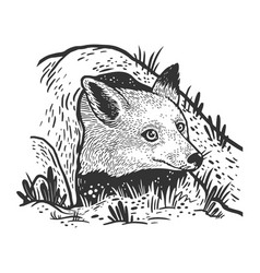 fox looks out hole sketch vector image