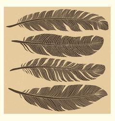 set grunge vintage bird feathers design vector image
