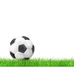 Soccer ball grass background vector image