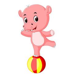 a baby circus hippo balancing on a big ball vector image vector image