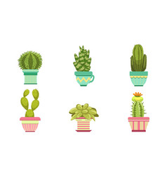cactus and succulents plants in flower pots set vector image