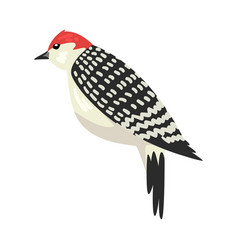 Cute woodpecker winter bird beautiful northern vector