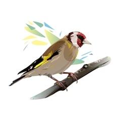 Goldfinch Bird vector