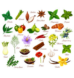 spices culinary herbs seasonings and vegetables vector image