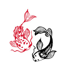 Two japanese carp koi fishes isolated on white vector