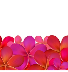 Pink Frangipani With Border vector image vector image