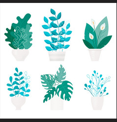 beautiful with flat home plants on vector image