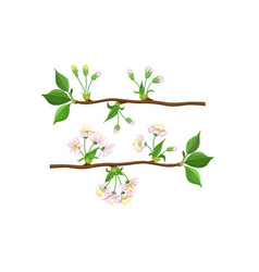 Blooming tree branches set apple or cherry flower vector