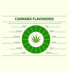 cannabis flavonoids horizontal infographic vector image